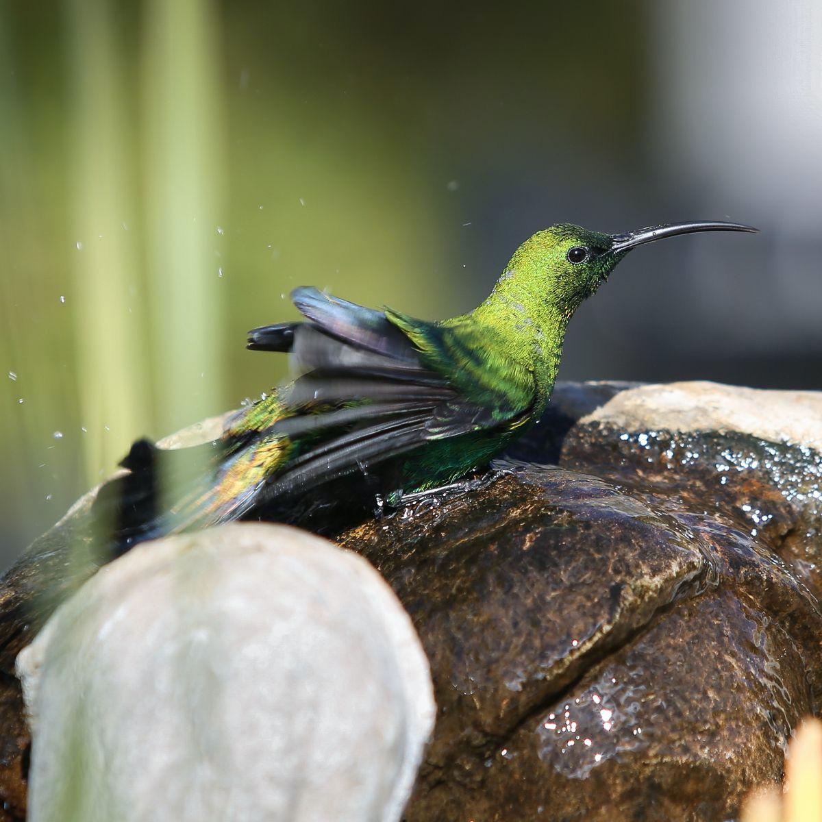 bird life karoo